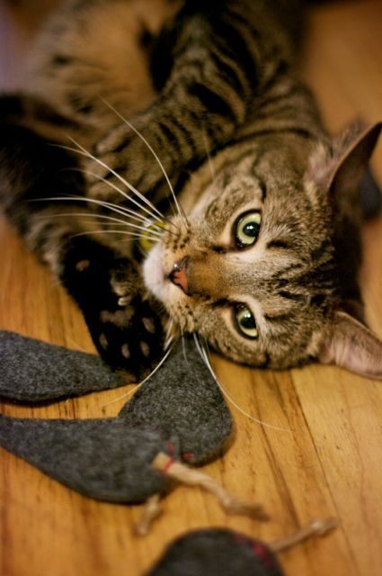 Tutorial: Catnip Mousies for your Modern Cat | The Zen of Making #toys #cats #cattoys #sewing