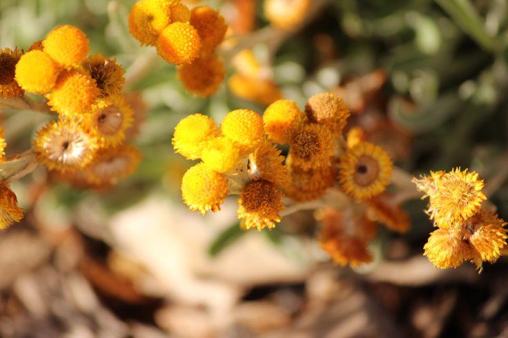 Moana flowers