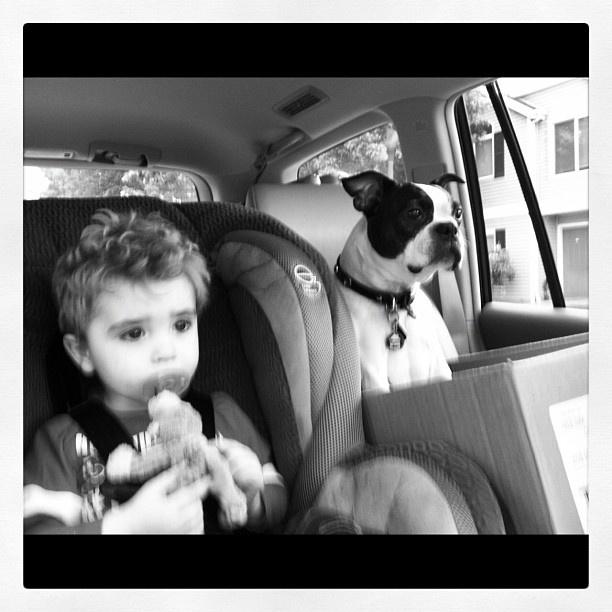 Best bros  #boston #terrier #photos