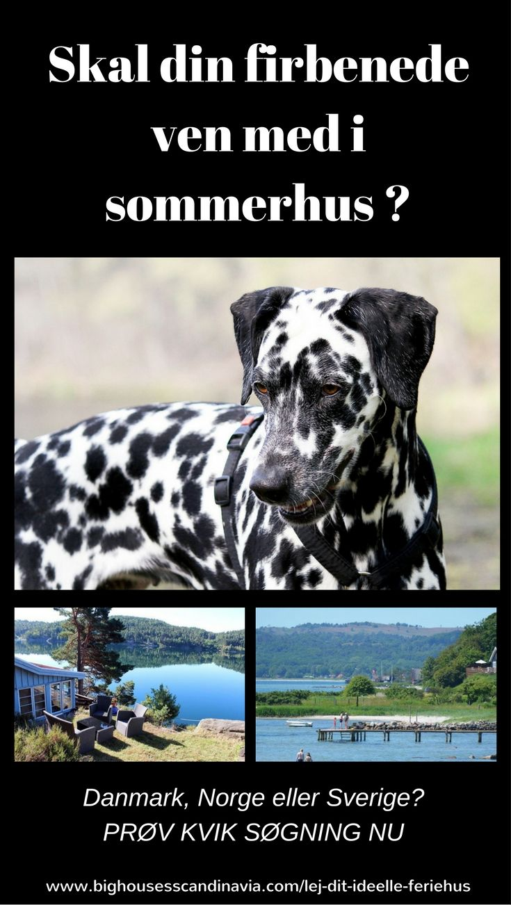Drømmer du om at holde ferie max. 100 m fra vandet? Vil du gerne have familiehunden eller hundene med?
