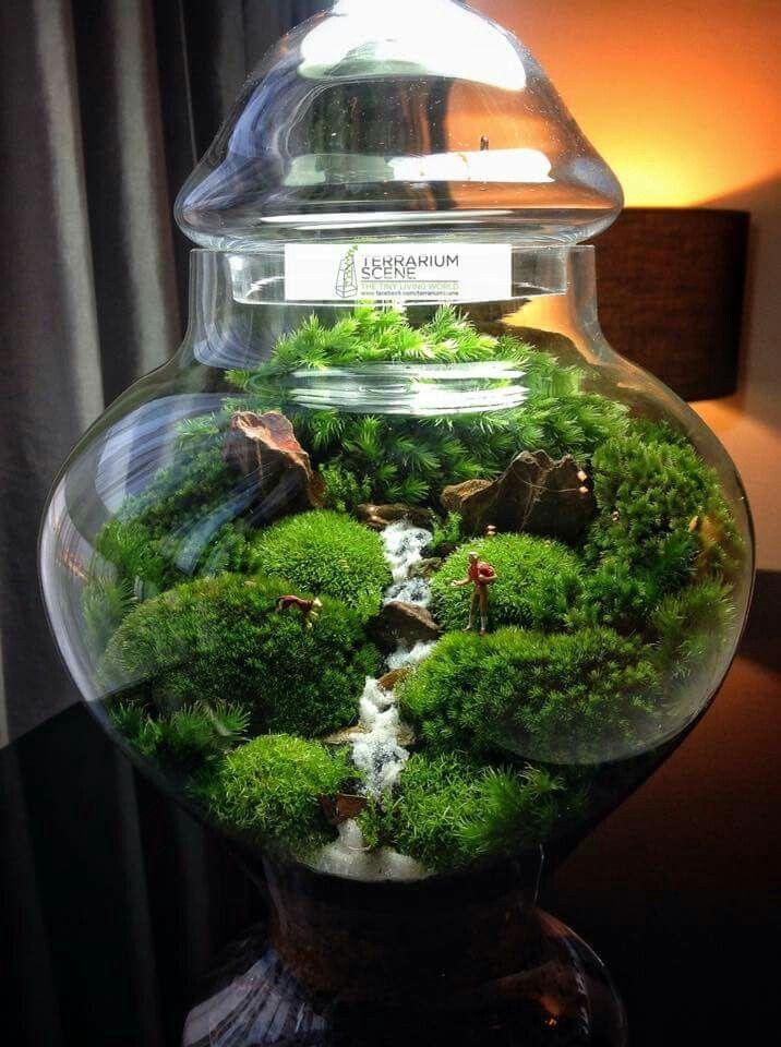 Mahmut Krnk455  Bonsai  Terrarium jar Terrarium
