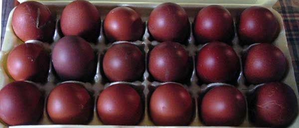 French Marans Chickens from Marans, France. These awesome, rare chickens lay maroon eggs!
