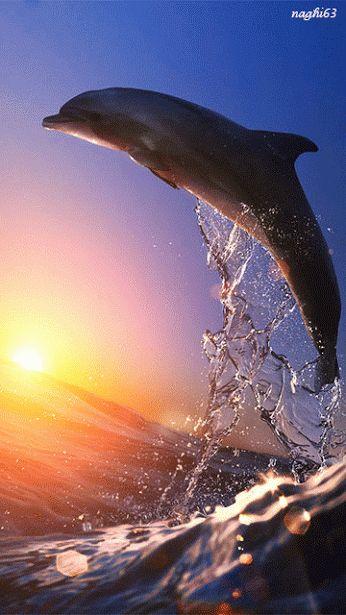 beautiful dolphin via Search - Google+