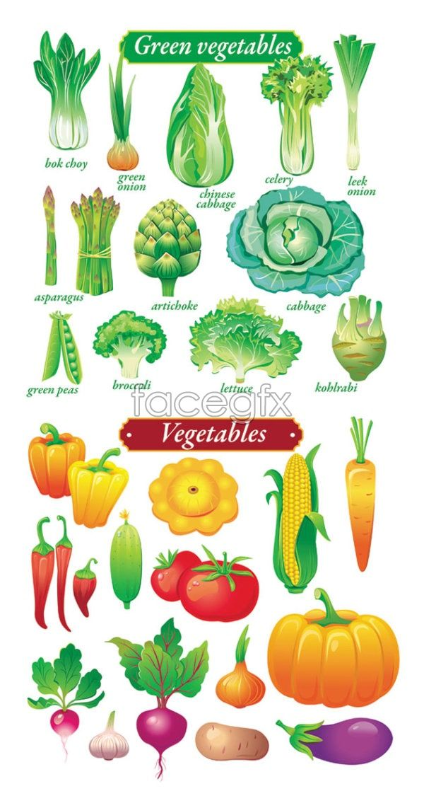 Fruits and vegetables, vector material     :)