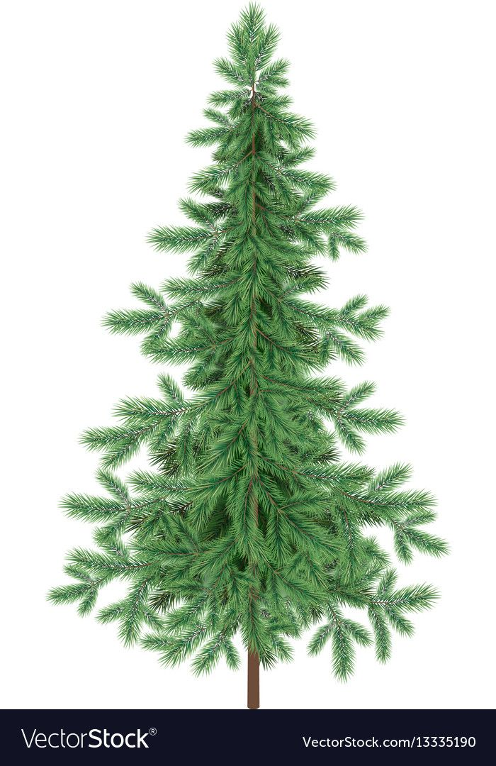 Christmas Green Spruce Fir Tree Isolated Vector Image Sponsored Spruce Fir Christmas Green Ad Vector Flowers Palm Tree Vector Floral Pattern Vector