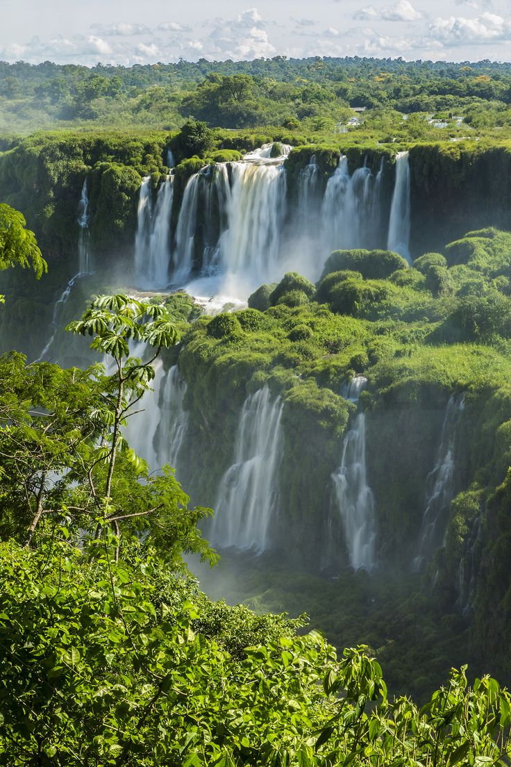 Iguazu Waterfall Through Trees Wall Mural