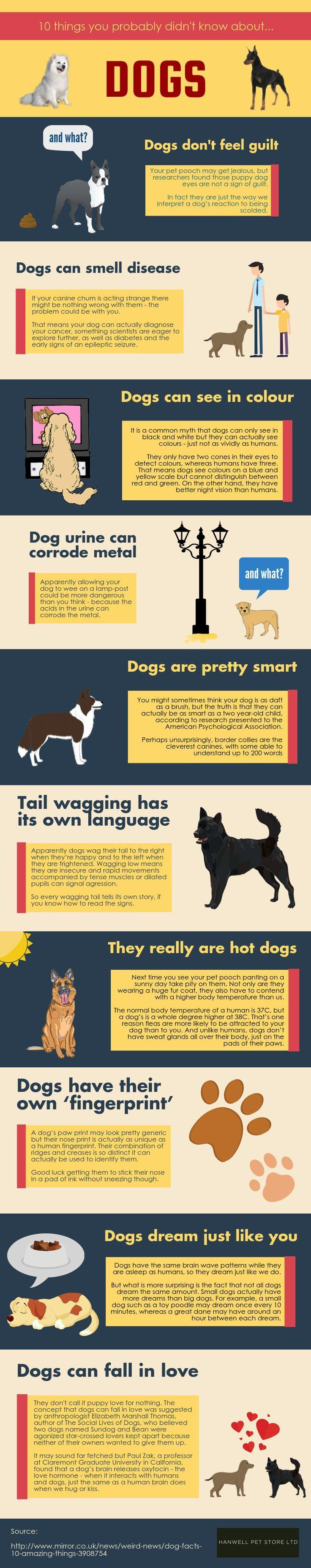 10 Things You Didn't Know About Dogs | pug facts | pug behavior
