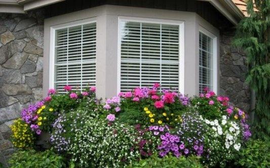flowers window boxes