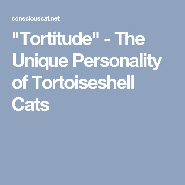 """""""Tortitude"""" - The Unique Personality of Tortoiseshell Cats"""