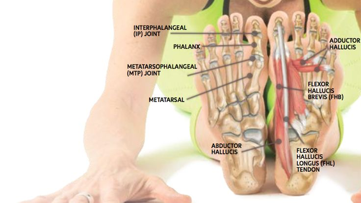 Anatomy 101: Strengthen Your Big Toes to Build Stability | Yoga Journal