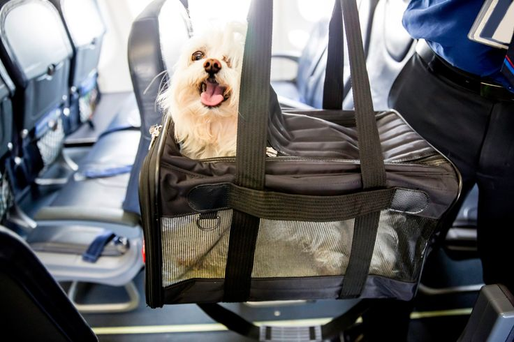 Save this for the best tips + tricks for bringing your pup on the plane.