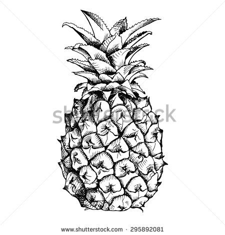Image of pineapple fruit. Vector black and white illustration. - stock vector