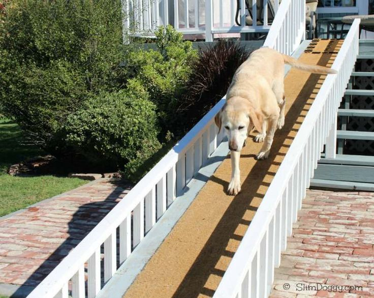 We Need This For Hobie The Things We Do For Our Dogs