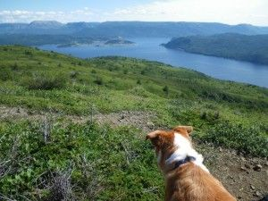 LOOK OUT, WE'RE CLIMBING A MOUNTAIN (Lookout Trail, Gros Morne National Park)