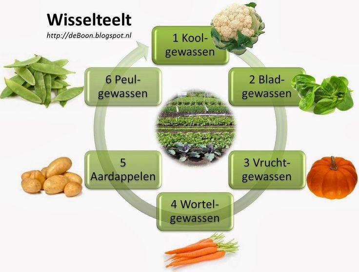 wisselteelt vruchtwisseling croprotation moestuin volkstuin Dit en nog veel meer over de moestuin op De Boon in de Tuin | http://deboon.blogspot.nl