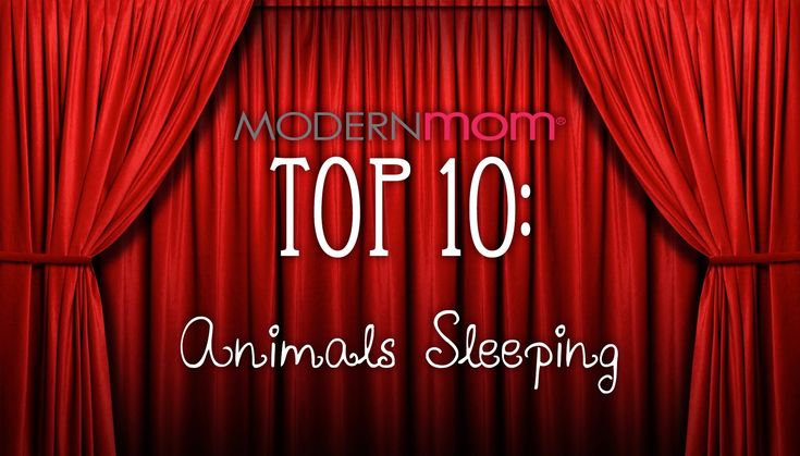 Sleepy Animals - Top 10 - need to lower your blood pressure?  just click :-)
