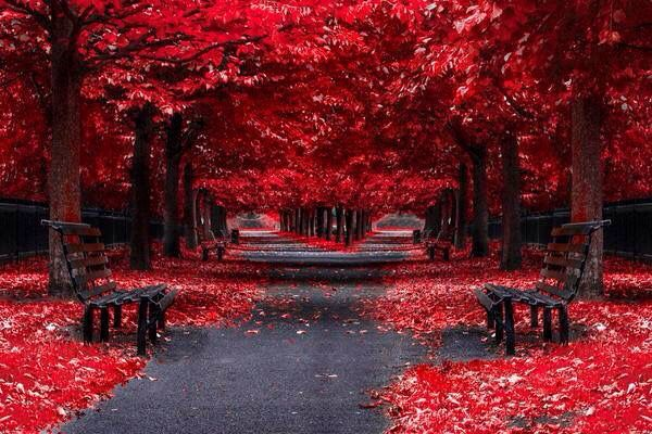 Beautiful red trees