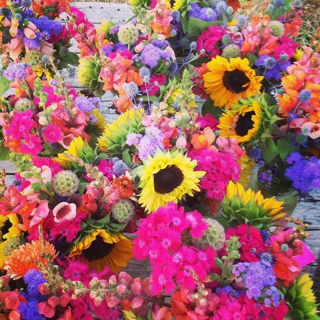 207 best Summer flowers images on Pinterest