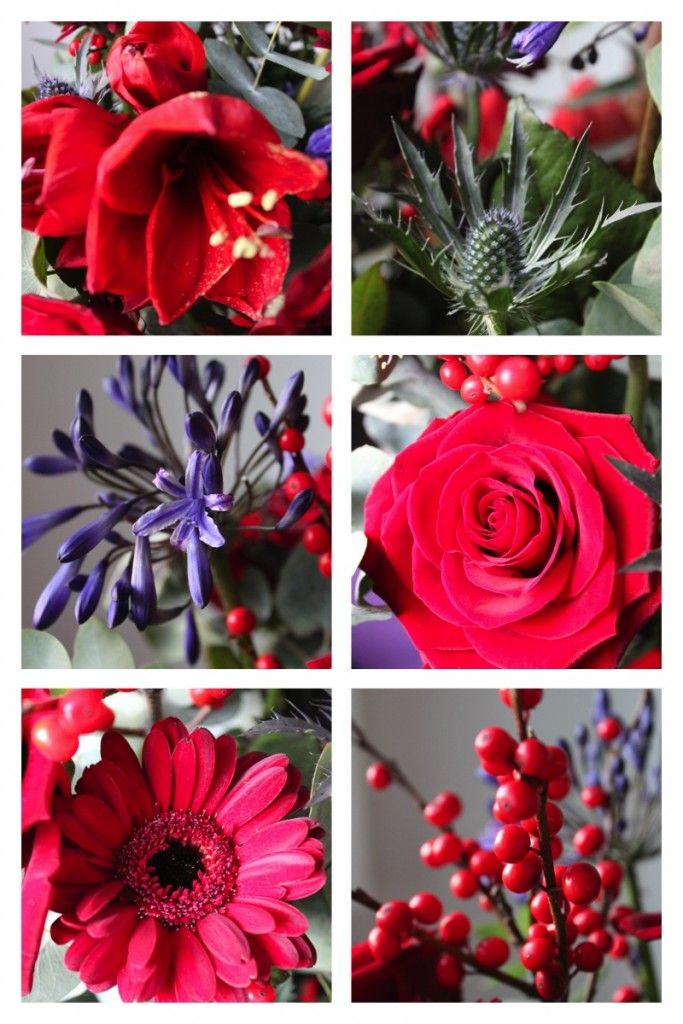 http://livingcolourstyle.com Amaryllis, Thistle, Agapanthus, red Rose, Gerbera, Red Ilex berries. More inspiration on Livingcolourstyle.com