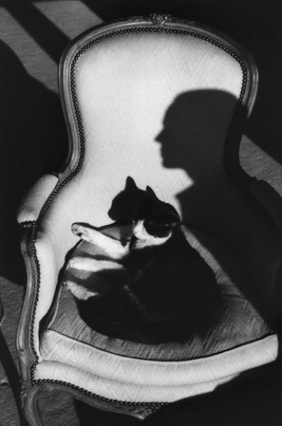 """""""Notre chat Ulysse et l'ombre de Martine"""" 1989. Photo de Henri Cartier-Bresson (1908-2004) photographe français, cofondateur de l'agence Magnum. Exposition à la Fondation HCB (Paris 14e) du 11.09 au 22.12.2013."""