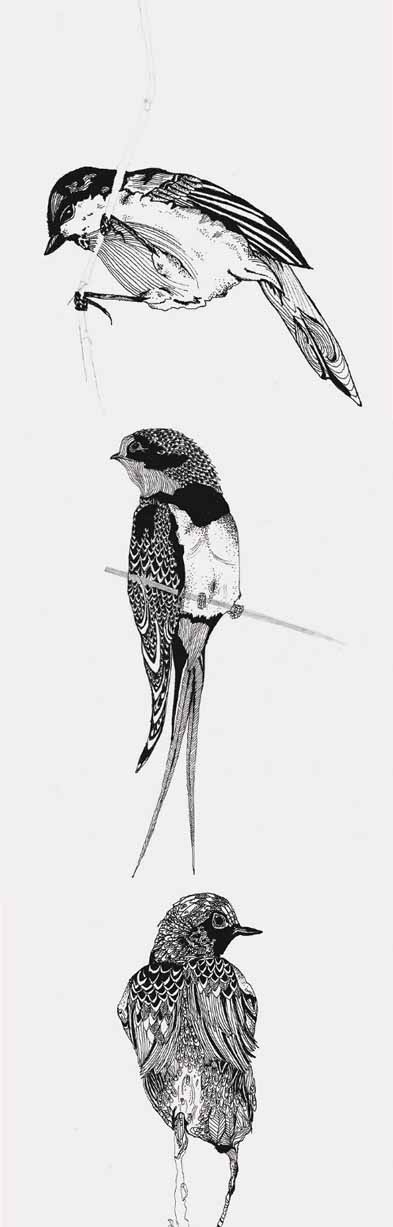 Pen drawings of Small Birds