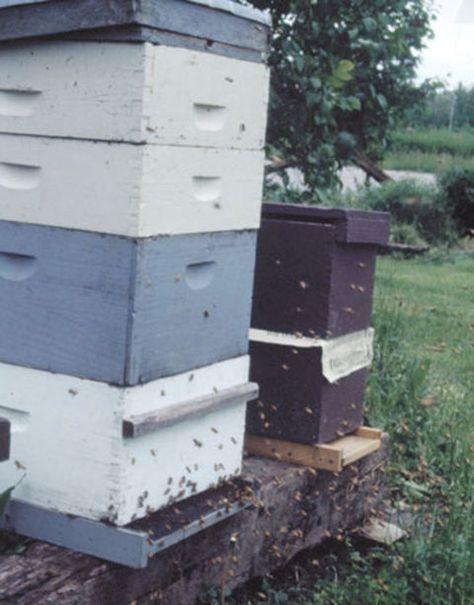 good information in popular mechanics for starting backyard beekeeping