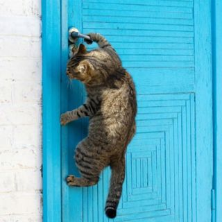 he knows how to open doors: Cats, The Doors, Doors Handles, Tabby Cat, Smarty Pants, Blue Doors, Kittens, Kitty, Animal
