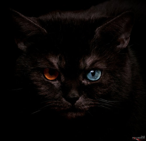 Gorgeous: Cats Eyes, Cat Eyes, Chat Noir, Color, Black Cats, Beautiful Eyes, Eyes Photographer, Blackcats, Animals Cats