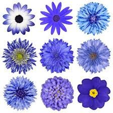 blue flowers - Google Search