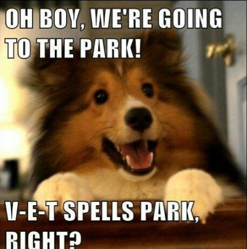 Funny Animal Pictures with Captions | Daily Afternoon Chaos (35 Pictures) | Funny Pictures, Quotes, Pics ...