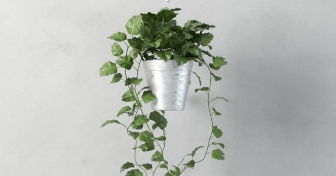 Modeling realistic plant with 3ds Max - Tip of the Week - Evermotion.org