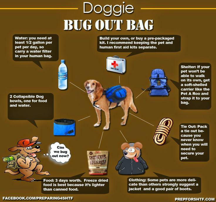 Survival Dog: Cão e a mochila de escape (BOB) Não dá mais? Se é hora de fugir, pegue sua bob, e seu dog, e fuja para as colinas... =)
