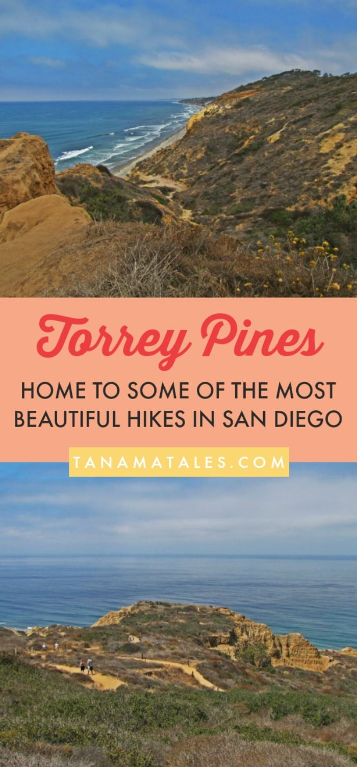 Torrey Pines: Rare Trees, Hikes and Trails - Tanama Tales