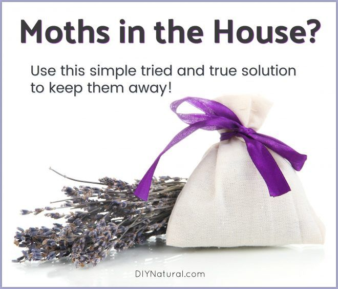 Best 25 Moth Repellent Ideas On Pinterest