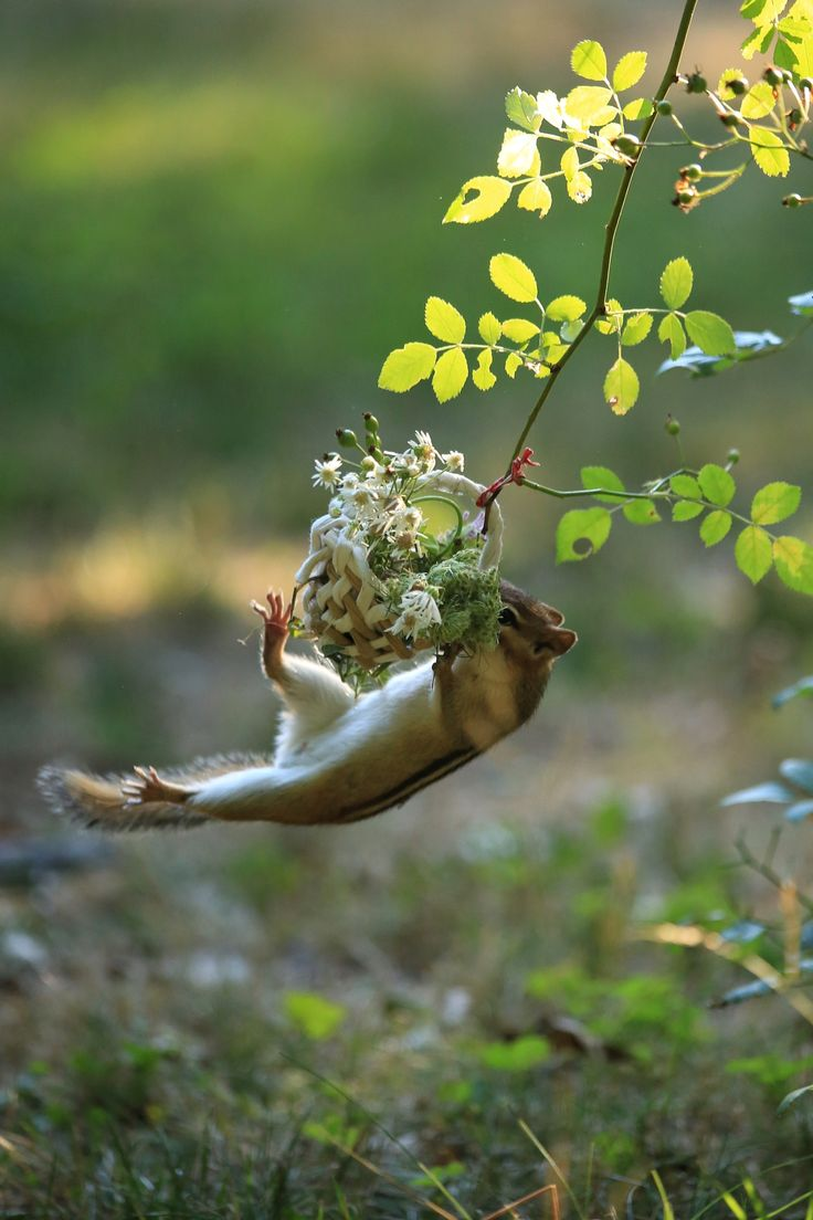 squirrel                                                                                                                                                                                 More