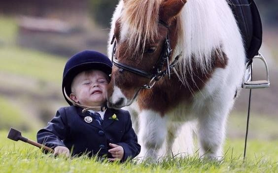 """The Equestrian's Motto... captured on Film... The Thrill of Victory...... The Agony of Defeat..... or """"There, there, lil Man.... said the Naughty Pony....!"""""""