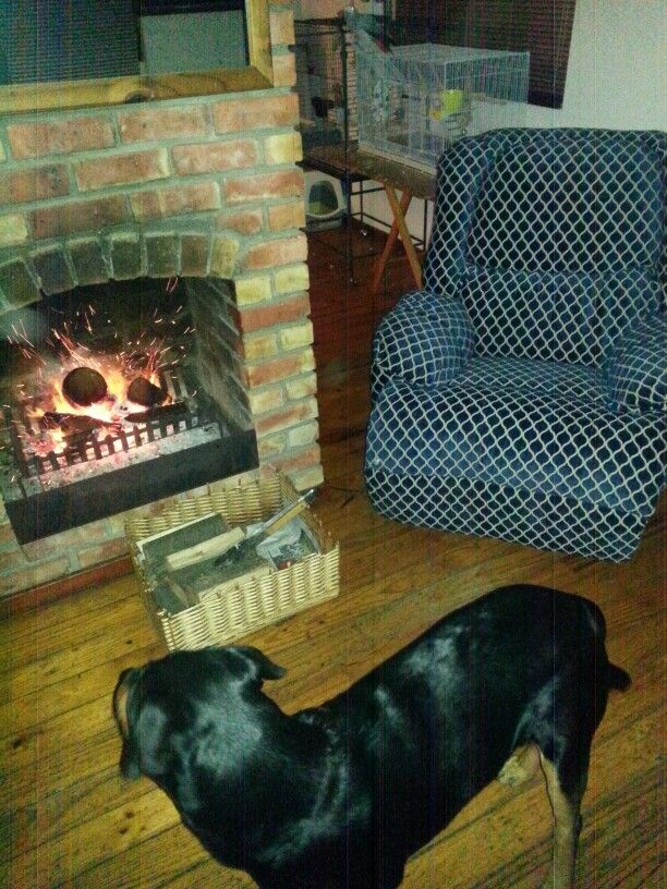 My Buttercup and a fire. Winter in the Western Cape.