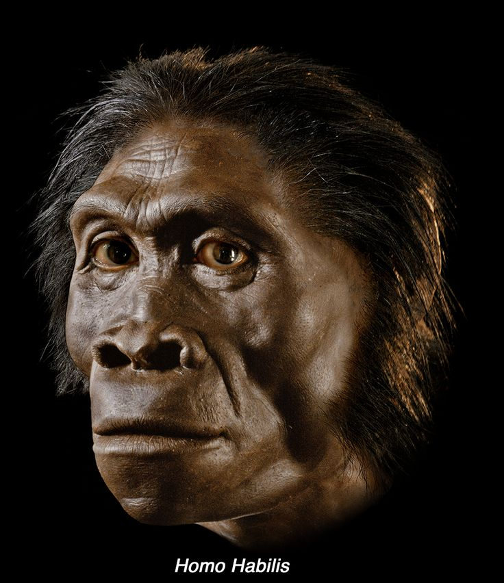 376 best 16-Homo habilis images on Pinterest