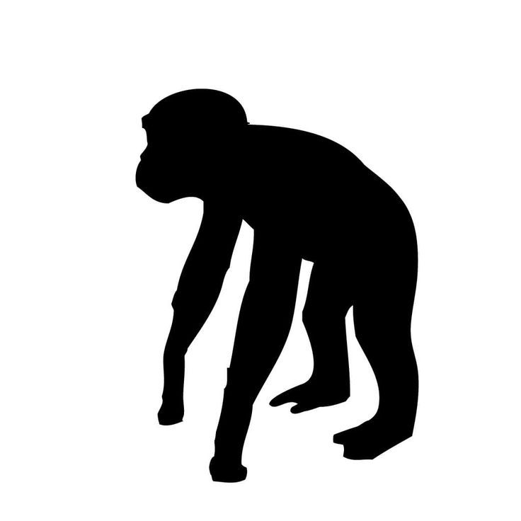 Monkey silhouette png