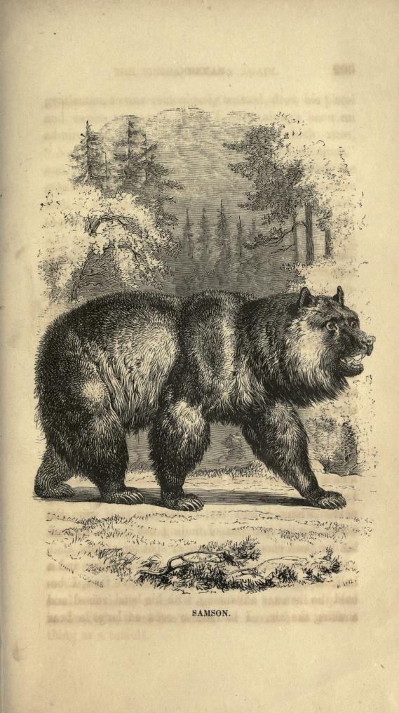 California Map Bear%0A Map Of Oregon Territory 1840