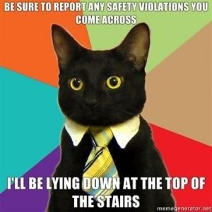 business cat meme is so cute. just look at that face!! LOOK AT IT!