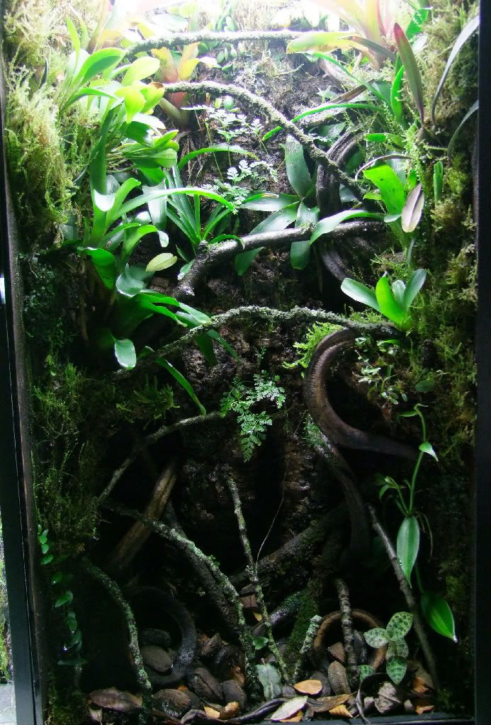 Exo Terra Dripper Plant Drip Watering System: 140 Best Images About Pet Frogs On Pinterest