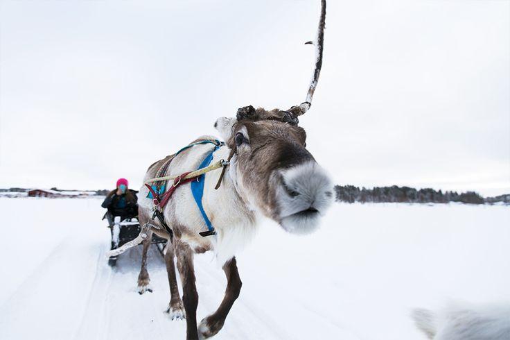 Finnisch Lappland im Winter ist einfach magisch: Weiße Wälder, Rentierschlitten, Schneeschuhwandern, Huskies und vieles mehr – auf in den hohen Norden!