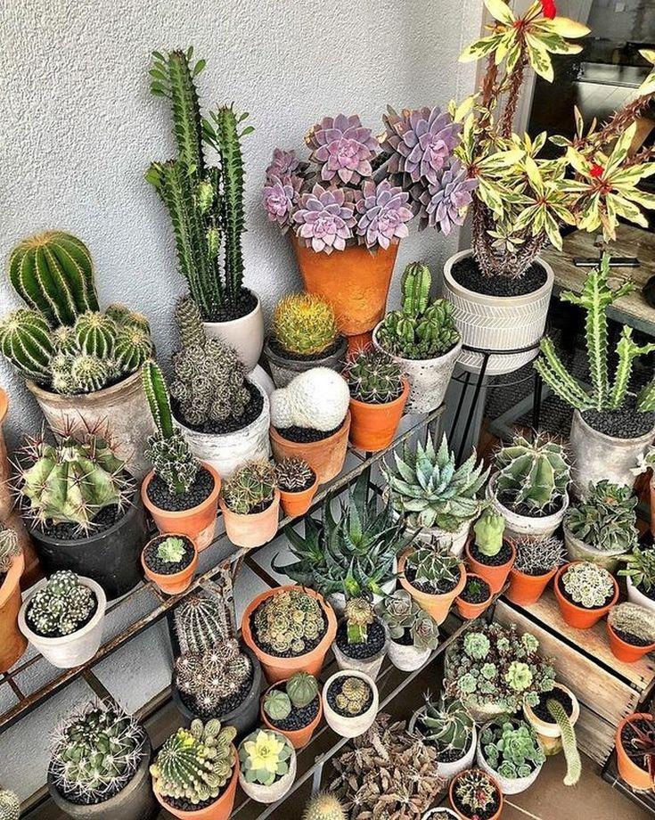 27 Beauty Cactus And Succulent Garden Ideas For Indoor