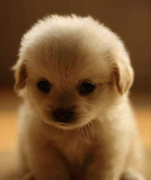 So Cute Just Want To Cuddle This Lovely Puppy Do You Want That