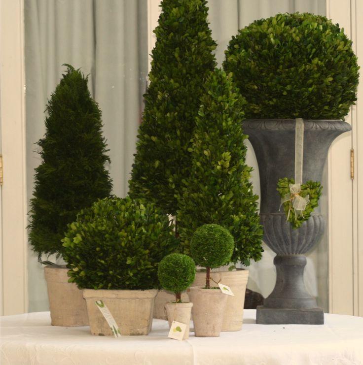 Plantas preservadas Gardenexpress