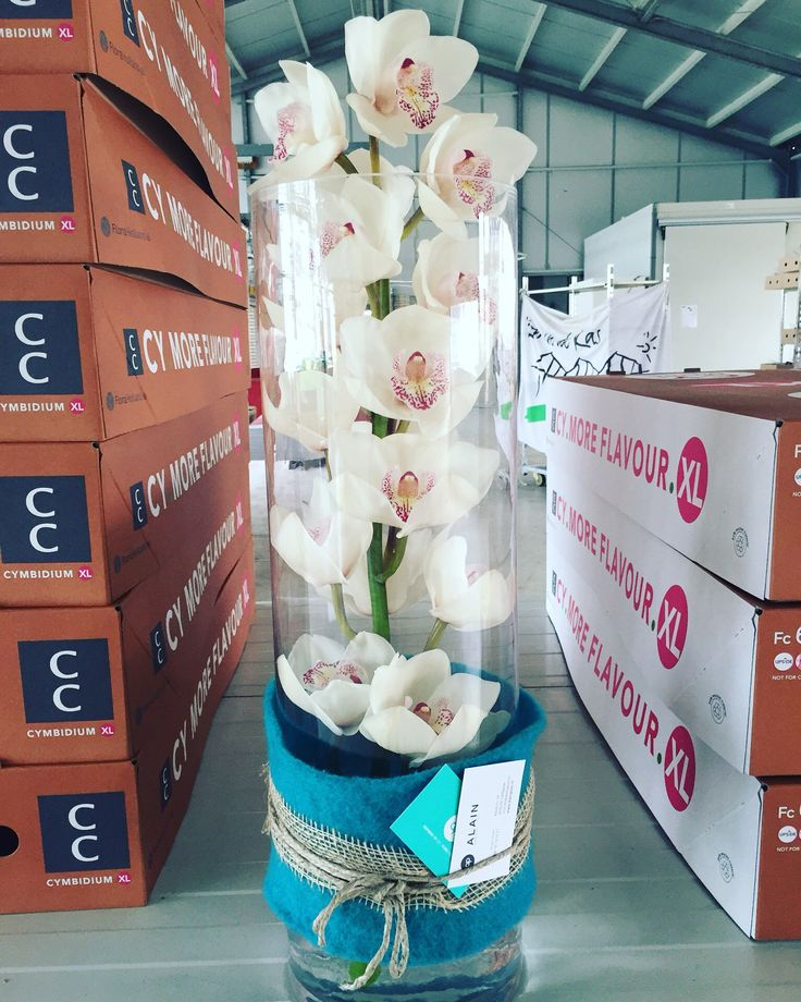 Orchid inspiration, our beautiful Merle in a decorated vase.