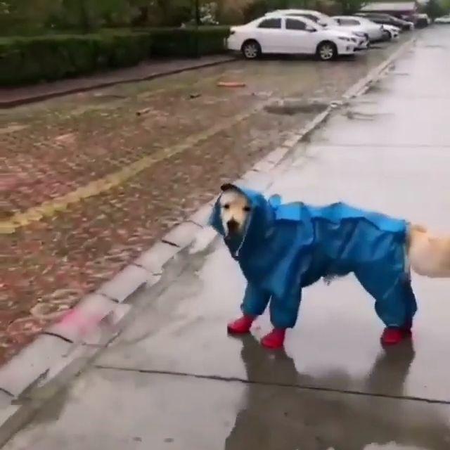 Wow Dog's Cutest Rain Coat & shoes ♥️❤️