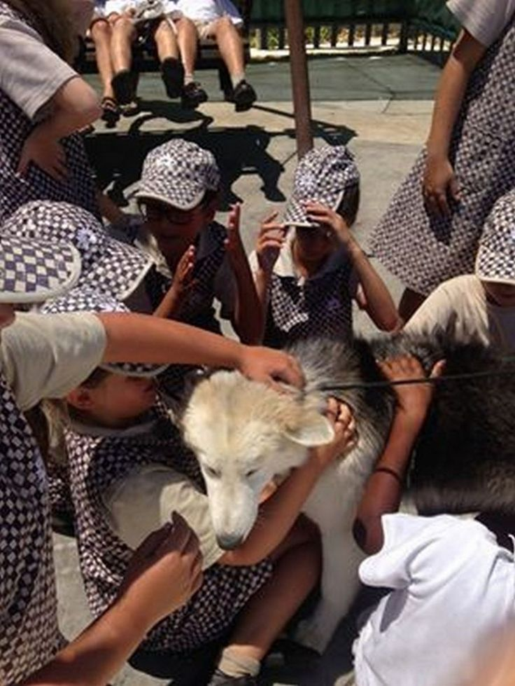 Grade 4 pupils visiting the Anti Animal-Cruelty League