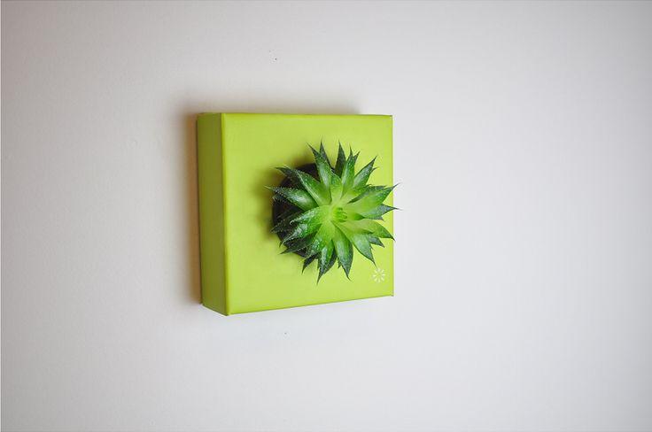 https://flowerbox.com.tr/urun/198/k-pot-tek